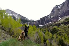 At 8,750 feet, Telluride is not only the highest town we've visited, it's one of the most enchanting - and pet friendly. For pet travelers, Telluride is tops!