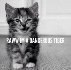 So Dangerous...