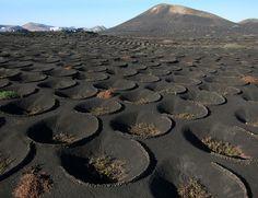 La Geria wine district on the lava fields of Lanzarote Island, Spain