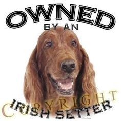 Are you owned my an Irish Setter. If you are then comment what their name and age is please? I would love to know! Mine is Rosie age 3 1/2 years old.