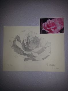 A rose for mom.:)