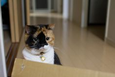 はっけん。(discovery) by ryoichi360, via Flickr