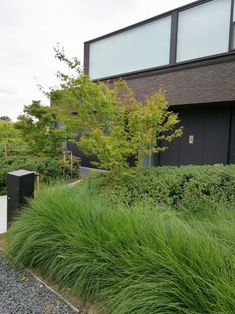 sdr Landscape Architecture, Landscape Design, Outdoor Spaces, Outdoor Decor, Construction, Garden Pool, Facade House, Front Yard Landscaping, Trees To Plant
