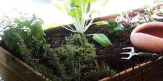 Huerto Urbano – Errores en el Cultivo II: El Trasplante.   Ecoterrazas