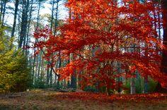 Autumn at Bedrock