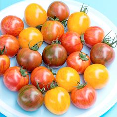 Tomato Seeds - Artisan Bumble Bee Mix - All Vegetable Seeds - Vegetable Seeds - Gardening - Suttons Seeds and Plants