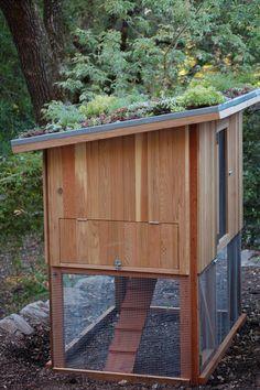 Vote for Star Apple Edible Gardens for Best Edible Garden in the Gardenista Considered Design Awards!