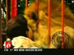 ▶ Lion's reaction to the woman who saved him. - YouTube