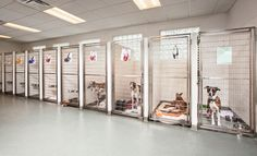Best Indoor Dog Kennel Ideas – The Paws