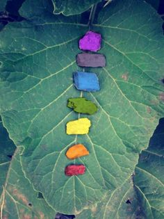 The Chakra's in nature.