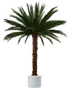 Palmen, Echtblattkonserviert im Spezialverfahren. Hochstammpalmen der Sorten Areca und Phoenix.  Palmenvermietung, Palmenversand.