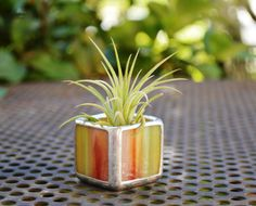 Multicolor Stained Glass Tillandsia Air by BeachCottageBoutique, $22.00