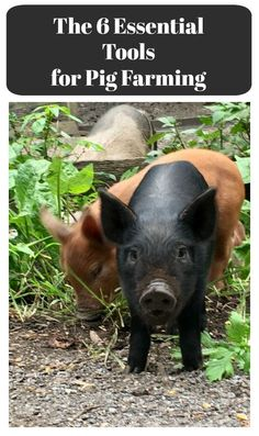 pig farming equipment
