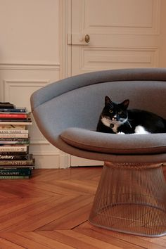desire to inspire - desiretoinspire.net - Monday's pets on furniture - part1