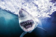 Famed celebrity photographer Michael Muller features breathtaking portfolio of shark photos in TASCHEN's new hardcover. Drones, Shark Books, Shark Photos, Exposition Photo, Animal Attack, Celebrity Photographers, Glamour Shots, Portraits, Great White Shark