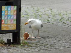 huge seagull next to the busstation by Norbert Reiss