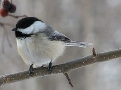 i love birds!  precious to look at, and the sounds of birdsong make my heart sing as well.