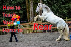 How to Teach You Horse to Rear