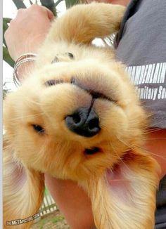 He's dog tired :-)