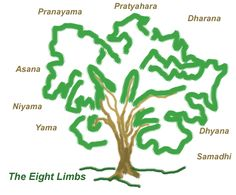 Just like a tree, no limb of the ashtanga is more or less important than any other limb.