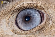 Common ostrich   These Extraordinary Close-Up Photos Of Animal Eyes Look Out Of This World