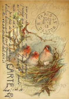 French Birds in Nest - Large image - French Postcard Tag- Instant Download Commercial Use- Script TL001