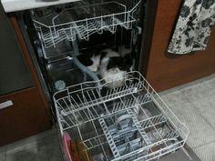 simon's cat valentine's day