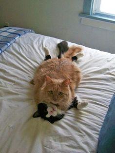 My money is on the orange cat