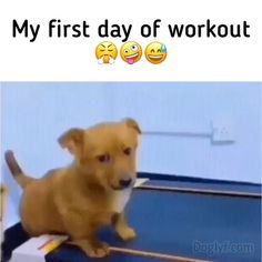 Funny Dog Videos, Funny Animal Memes, Funny Animals, Cute Animals, Cute Funny Dogs, Cringe, Smiley, Doggies, Baby Animals