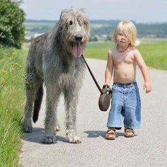 Irish wolfhound!