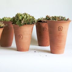 Succulents provide a contrast against the terra cotta of No. Two Tom Pots | Frances Palmer