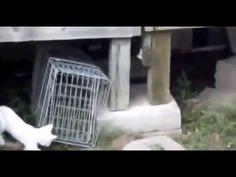 BEST Funny Videos 2014 Funny Cats Video Funny Cat Videos Ever Funny Animals Funny Fails 2014 - http://positivelifemagazine.com/best-funny-videos-2014-funny-cats-video-funny-cat-videos-ever-funny-animals-funny-fails-2014/ http://img.youtube.com/vi/Y1J6XRT6mDY/0.jpg  حياة في البرية حياة الغابة حيوانات برية حيوانات متوحسة حيوانات لطيفة حيوانات أليفة نمور الأسد القط ناسيونا… Judy Die