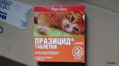 Risultati immagini per кишечные паразиты у котов