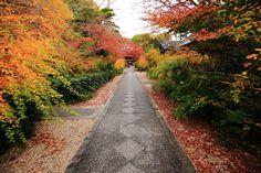 京都の梨木神社のもみじと萩の紅葉
