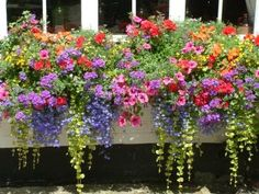 Paint window boxes black/hang on house. Love these flowers annual flowers for window boxes Full Sun Flowers, Cascading Flowers, Amazing Flowers, Window Box Flowers, Balcony Flowers, Window Box Plants, Garden Windows, Annual Flowers, Plantation