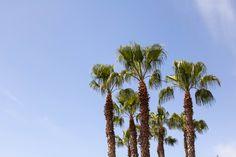 A Sunny Escape to Costa Adeje, Tenerife