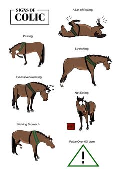 Your Horse's Lumps & Bumps Colic: Detect, Prevent and Learn As horse owners and carers, we are likely to have come across a horse with colic at least once thro… - Art Of Equitation Cute Horses, Pretty Horses, Horse Love, Beautiful Horses, Horse Behavior, Horse Information, Horse Facts, Facts About Horses, Horse Riding Tips