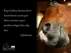 If you believe horses don't know how to count, then put three carrots in your pocket and give him only two.