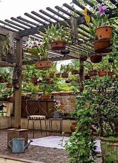 ORQUIDÁRIOS DE DAR INVEJA (Foto: Edu Castello) Hanging Orchid, Hanging Plants, Orchid House, Shade House, Patio Shade, Orchids Garden, Garden Trellis, Pergola Patio, Pergola Ideas