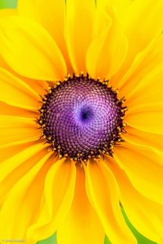 Flower #yellow #purple