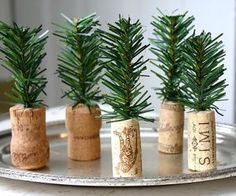 tiny trees, perfect for table decs at Christmas ... hey, i bet our family can do this at Christmas dinner ... hahahahahahaha!