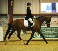 Floriada M | Dressage Horses For Sale | DressageMarket.com