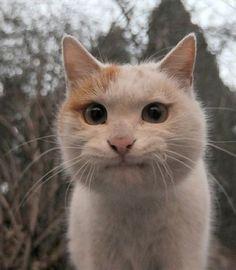 What a super little face!