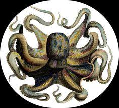 Octopus Brooch Pin by MermaidBeachgear on Etsy