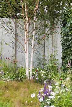 Trees And Shrubs, Flowering Trees, Trees To Plant, Garden Landscape Design, Garden Landscaping, White Birch Trees, Photo Images, Deco Floral, Woodland Garden