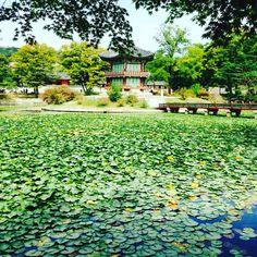 #gyeongbokgung #southkorea #seoul #palace #gratidãoeterna #peaceful #nature #instatraveling #instagood