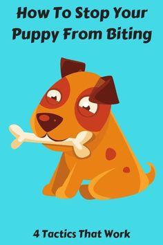 Pet Toilet Tray Puppy Potty… #dogtrainingcourse