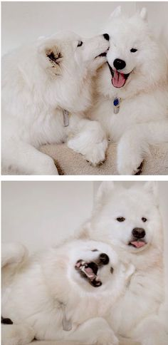 Beautiful and perfect dogs