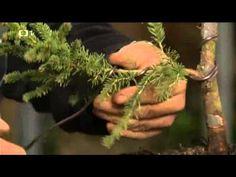Pestujeme bonsay - YouTube