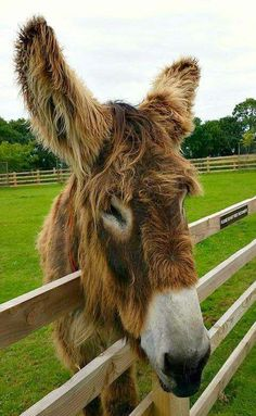 Donkey Sanctuary in Sidmouth